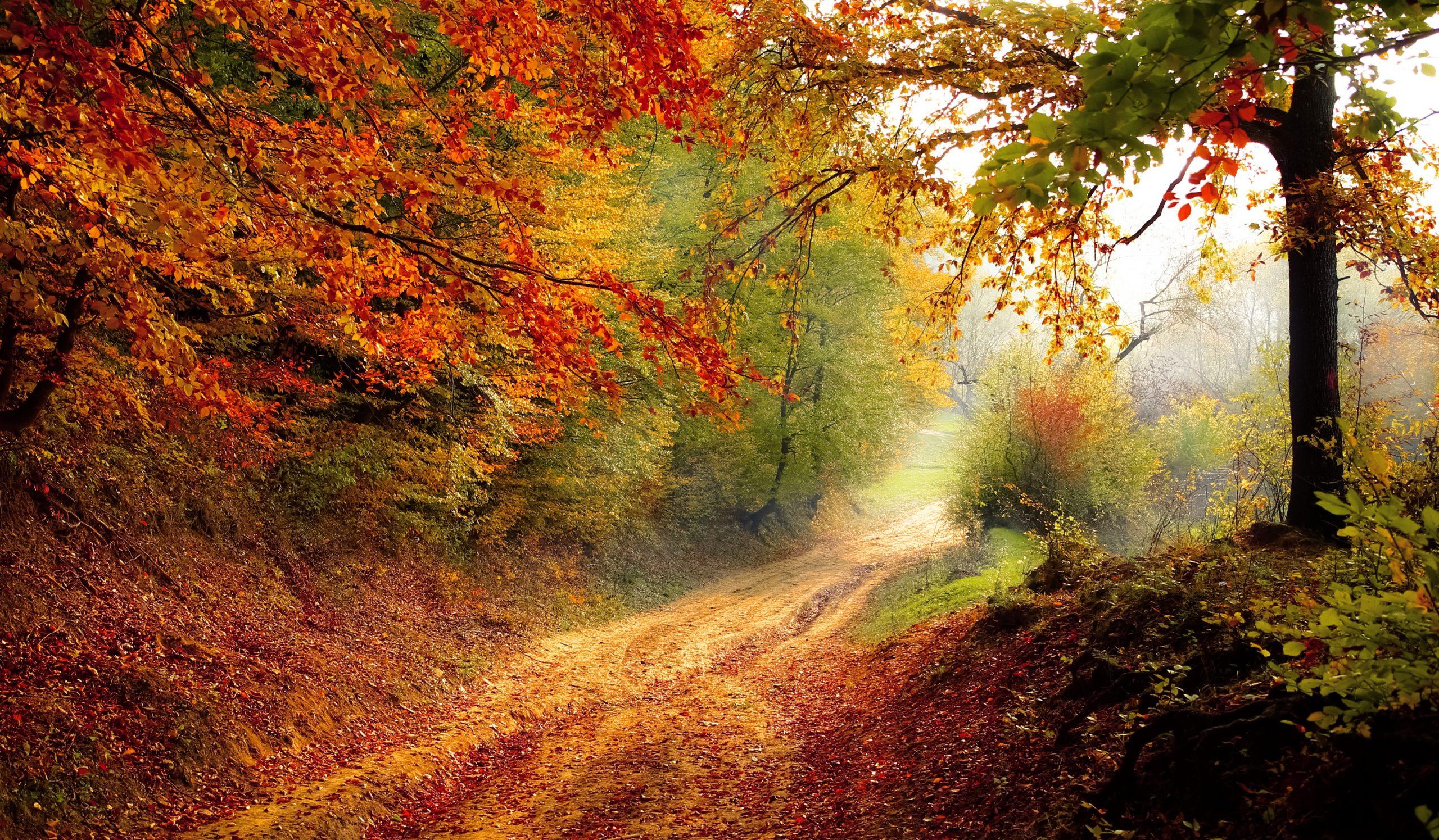 Herbst Blätter Laub