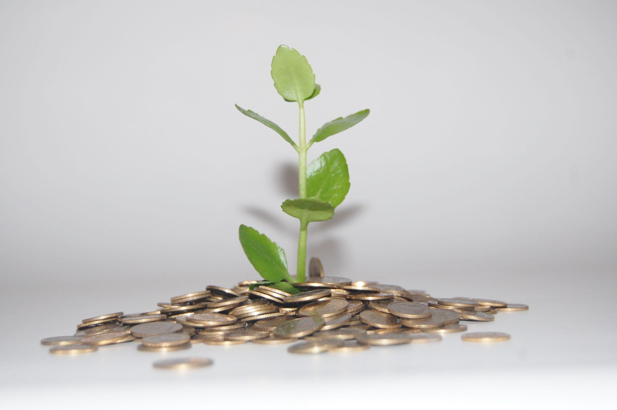 Pflanze aus Geld-Haufen