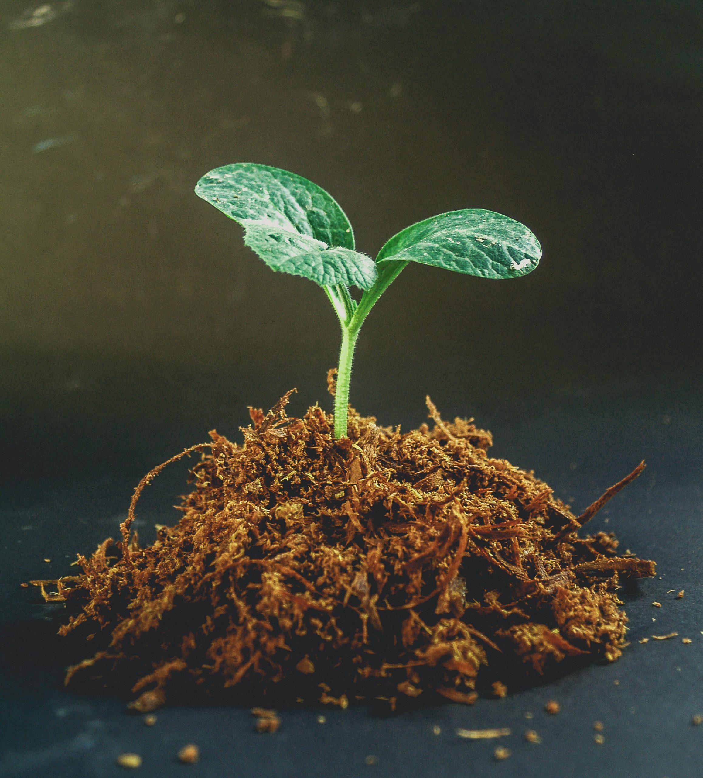 Junge grüne Pflanze - Erschaffen